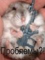 Бухайщик
